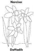 Imagenes para dibujar . Dibujos para colorear (primavera narciso colorear ingles espaã±ol)