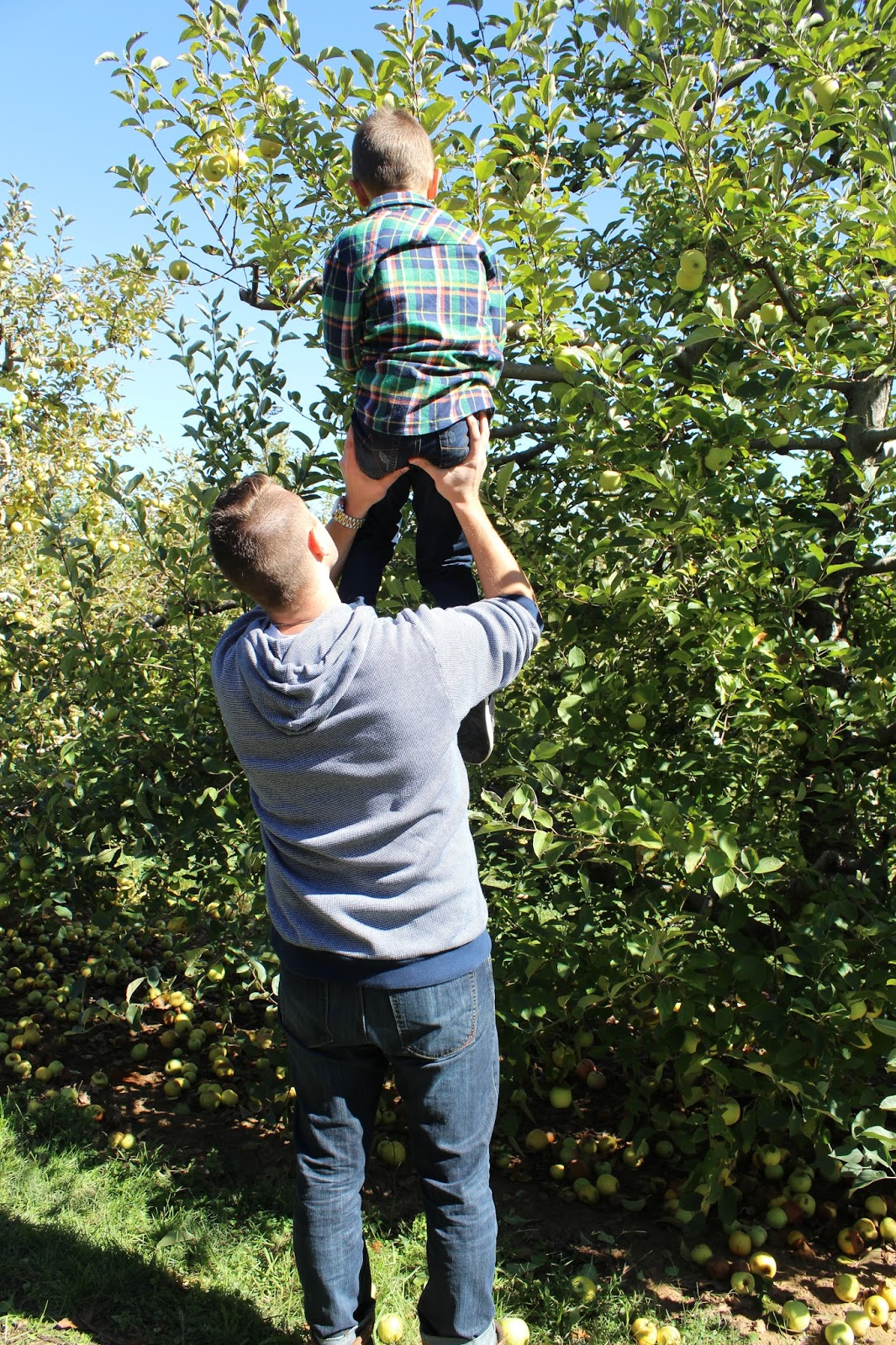 Family Apple Picking