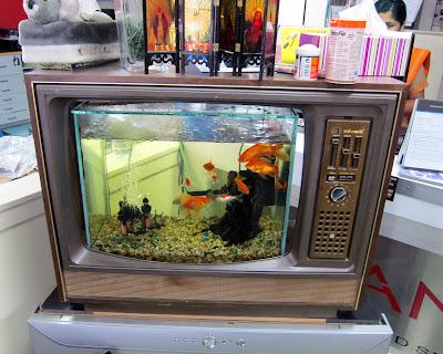 Transpress nz fish tank tv set for Fish tank set
