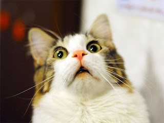 funny cat face wonder