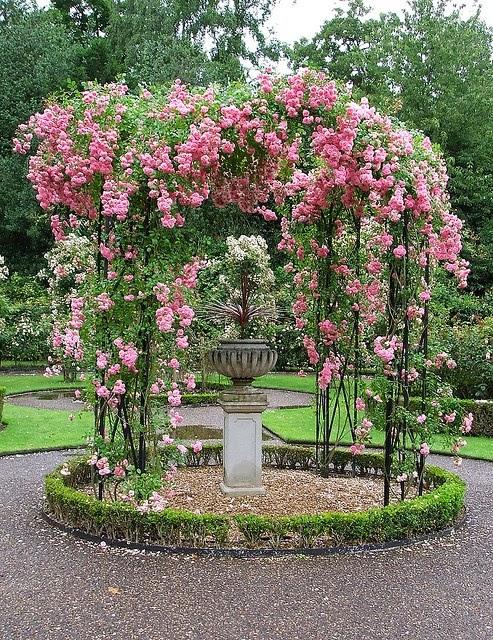 La dame des roses giardini di rose - Giardino con rose ...