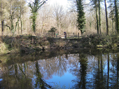 second world war bomb crater pond, forest of bere hants