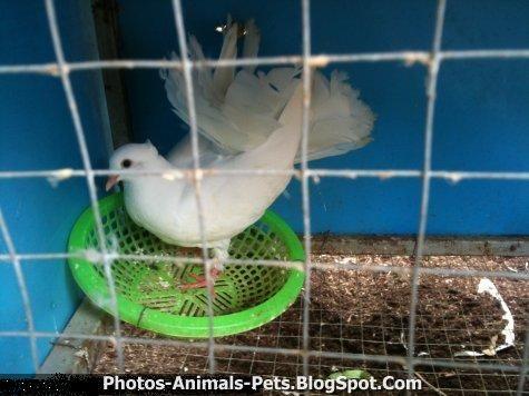 http://3.bp.blogspot.com/-Qe2Jn0S19MY/TxROX299xyI/AAAAAAAACwE/XaLcMhzQ5gk/s1600/White%2Bdove.jpg