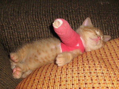 http://3.bp.blogspot.com/-Qe2Wg0Xby2k/TjFyyQX8E4I/AAAAAAAABAs/0oSC3ca6ePY/s400/kitten-in-cast.jpg