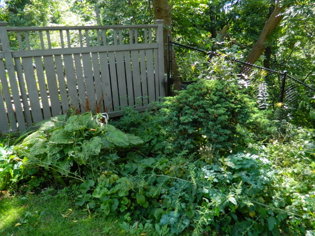 Baby Point garden cleanup before Paul Jung Gardening Services Toronto