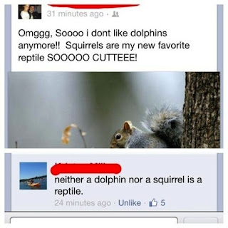 squirrels and dolphins reptiles
