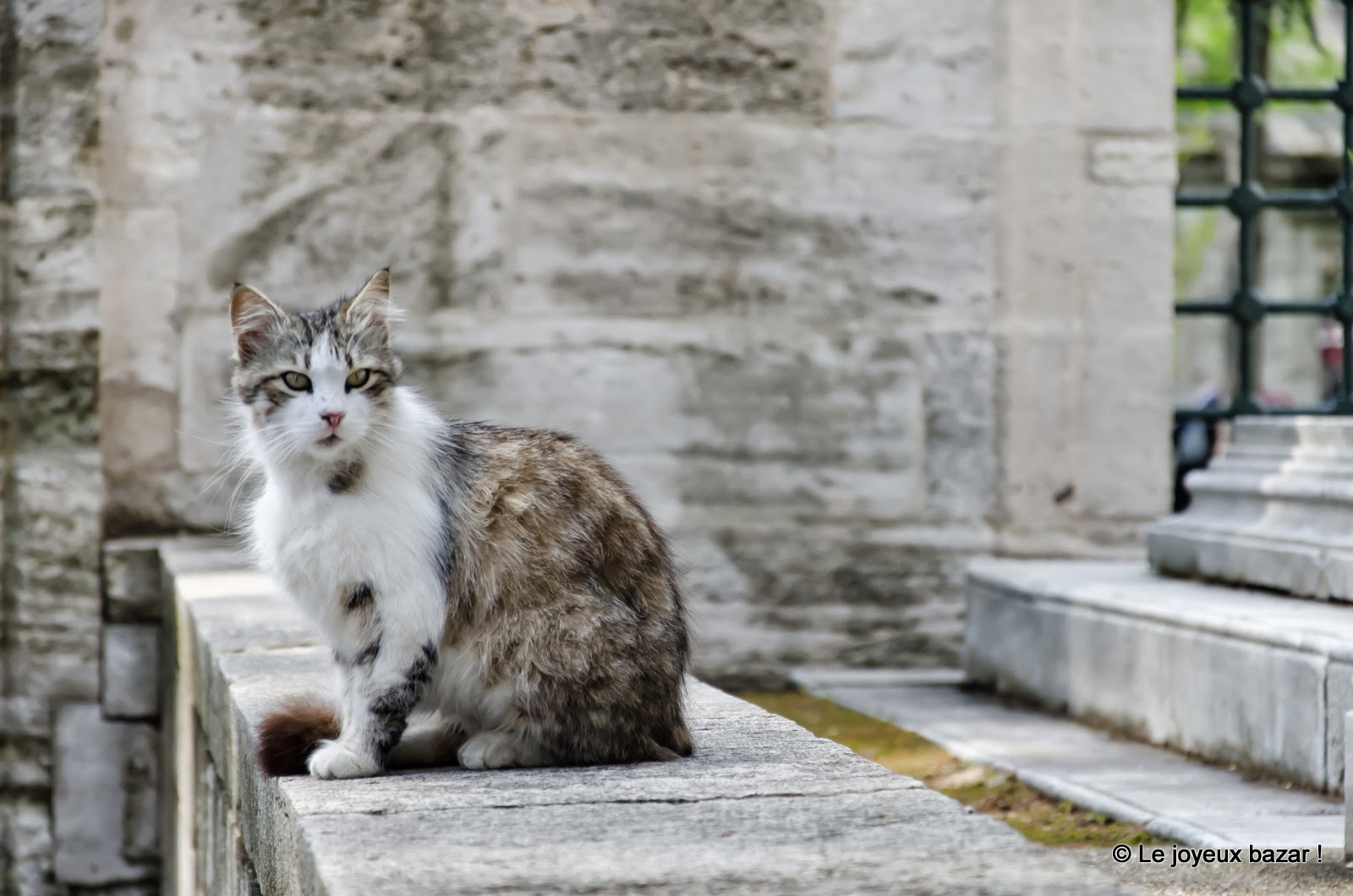 Istanbul - chat