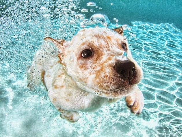 adorable-puppy-1