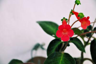 Plantas y Flores de Veracruz Mexico Lengua de Suegra 1920x1275 Alta Resolución Gratis