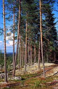 Kesämaisema 2001 - Copyright Kuvatoimisto Albumi - www.albumi.fi