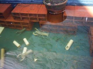 Perlengkapan Budidaya Lobster