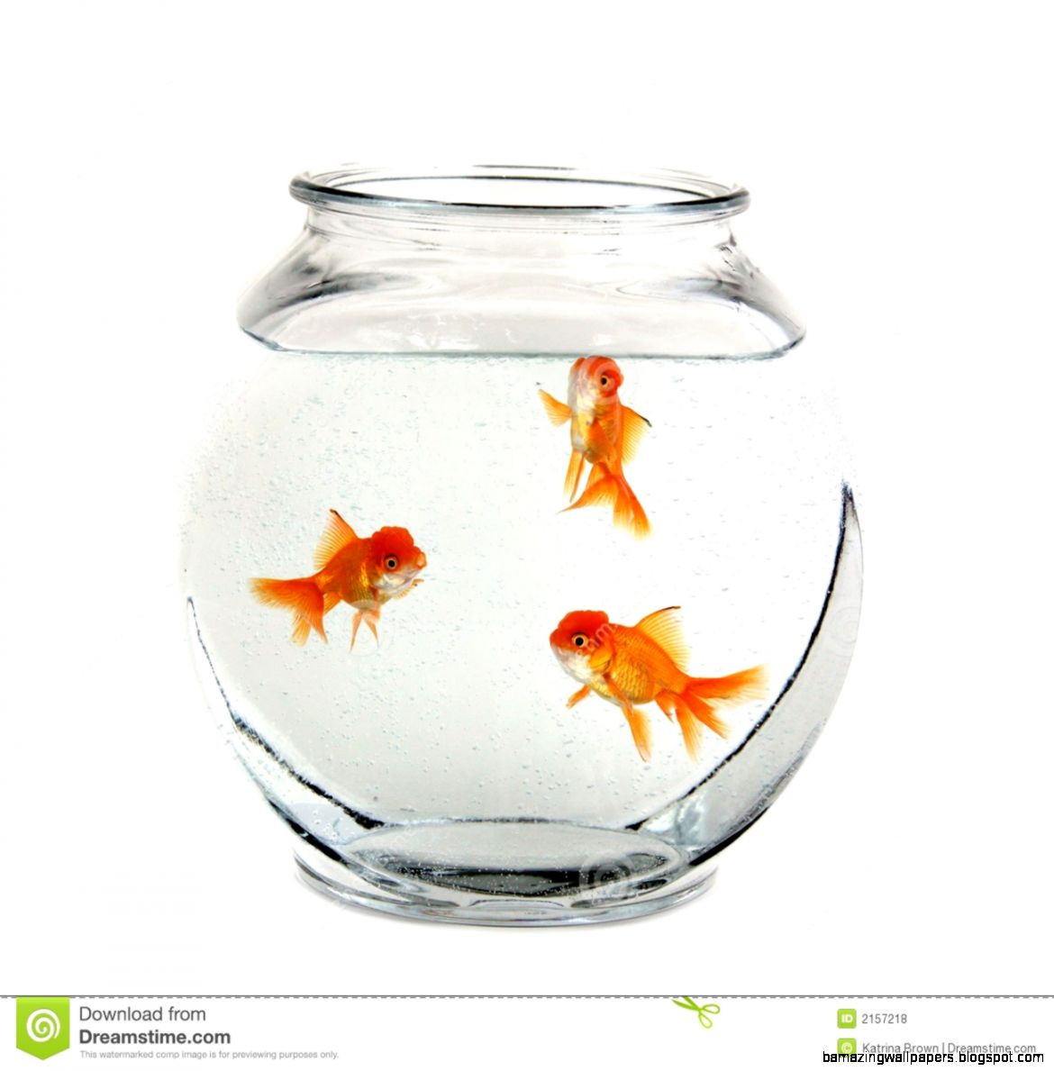 Golden fish in a bowl amazing wallpapers for Fish in a bowl