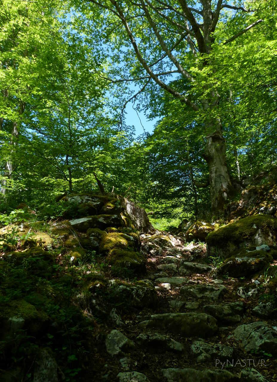 Bosque de Lindes - Parque Natural de Las Ubiñas - La Mesa - Asturias