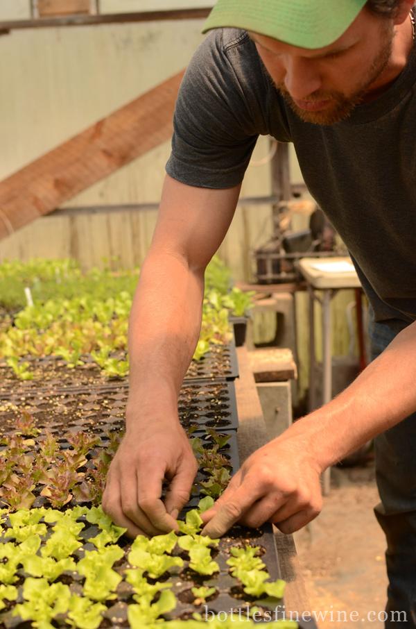 rhode island massachusetts organic farms