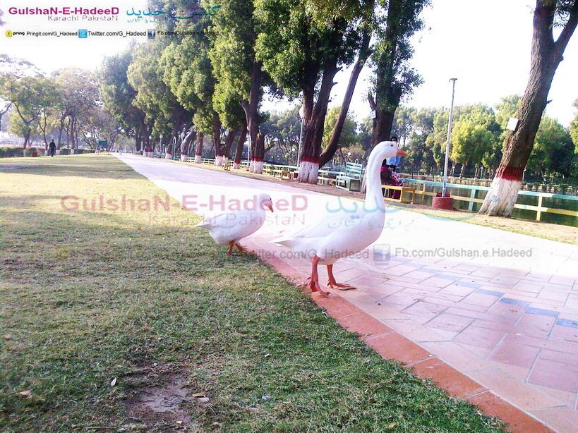 Gulshan-e-hadeed Pictures, Gulshan-e-hadeed Pics, Gulshan-e-hadeed Images, Gulshan-e-hadeed Wallpapers, Gulshan-e-hadeed Potos, Gulshan-e-hadeed Videos, Gulshan-e-hadeed Img, Gulshan-e-hadeed Places, Gulshan-e-hadeed Markets, Gulshan-e-hadeed Schools, Gulshan-e-hadeed Colleges, Gulshan-e-hadeed Shops, Gulshan-e-hadeed Bazars, Gulshan-e-hadeed Location, Gulshan-e-hadeed Google Map, Gulshan-e-hadeed Websites, Gulshan-e-hadeed Karachi, Gulshan-e-hadeed Postal Code, Gulshan-e-hadeed Property Sale, Steel Town Gulshan-e-hadeed, Gulshan-e-hadeed Steel Mils, Gulshan-e-hadeed Transport, Gulshan-e-hadeed Wiki, Gulshan-e-hadeed Zameen, Map Of Gulshan-e-hadeed, Phase 1 Gulshan-e-hadeed, Phase 2 Gulshan-e-hadeed, Gulshan-e-hadeed Facebook, Gulshan-e-hadeed Youtube, Gulshan-e-hadeed Dailymotion, Gulshan-e-hadeed Viber, Gulshan-e-hadeed Blog, Gulshan-e-hadeed Masjids, Gulshan-e-hadeed Imam Bargha, Gulshan-e-hadeed Roads, Gulshan-e-hadeed Hospitals, Gulshan-e-hadeed Electronic Shops, Gulshan-e-hadeed Mobile Shops, Gulshan-e-hadeed Kesc Center, Gulshan-e-hadeed Complain Centr, Gulshan-e-hadeed Green Bus, Gulshan-e-hadeed Muslim, Gulshan-e-hadeed Phase 3, Gulshan-e-hadeed Houses, Gulshan-e-hadeed Rent Houses, Gulshan-e-hadeed Homes, Gulshan-e-hadeed Bin Qasim, Gulshan-e-hadeed Steel Mills Park, Gulshan-e-hadeed Meaning, Gulshan-e-hadeed Urdu, Gulshan-e-hadeed English, Gulshan-e-hadeed Jewellers Shops, Gulshan-e-hadeed Security, Gulshan-e-hadeed Geography, Gulshan-e-hadeed Development Phases, Gulshan-e-hadeed Streets And Roads, Gulshan-e-hadeed Peoples, Gulshan-e-hadeed Castes, Gulshan-e-hadeed Link Road, Gulshan-e-hadeed Companies, Gulshan-e-hadeed Area, Gulshan-e-hadeed Town, Gulshan-e-hadeed L7, Gulshan-e-hadeed Karachi, Gulshan-e-hadeed Telephone Exchanges, Gulshan-e-hadeed Hotels, Gulshan-e-hadeed Entrance, Gulshan-e-hadeed Rent Shops, Gulshan-e-hadeed Phase 1 Phase 2 Phase 3.
