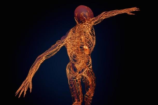 Cientistas descobrem conexão entre sistema imunitário e cérebro