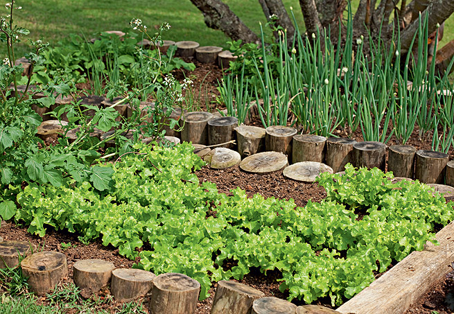 Pequena horta nas alturas Decorativo e funcional!
