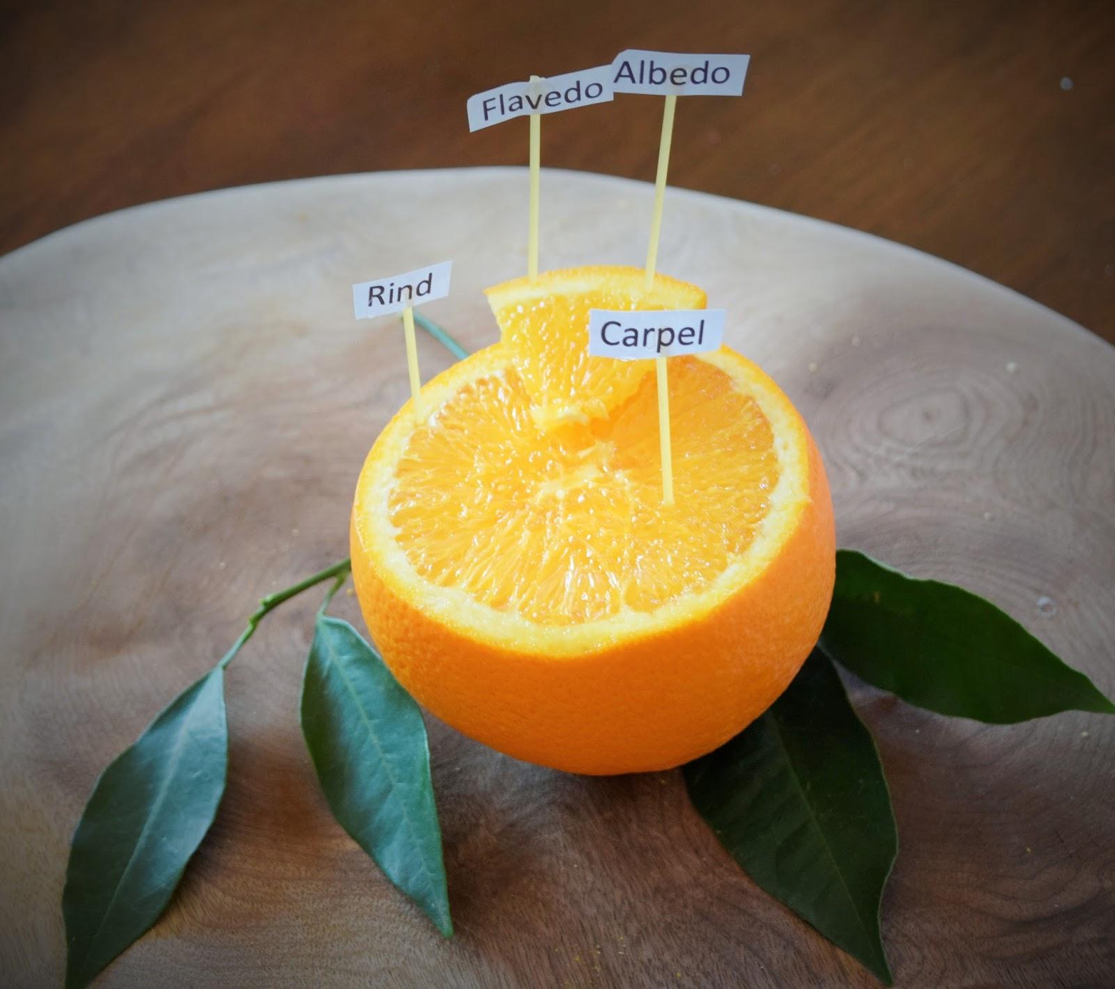 Grown Healthy: Orange Fun and Salad – Homegrown Adventures