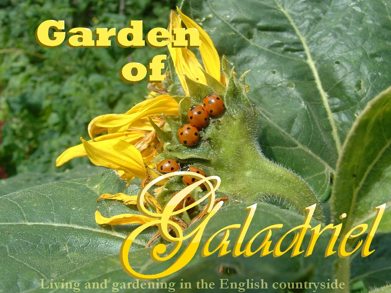 Garden of Galadriel