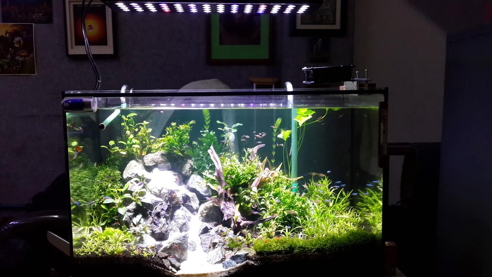 led aquarium lighting blog orphek orphek red model freshwater