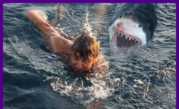 Golfinhos salva homens de tubarão