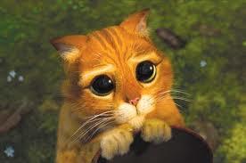 Me paresió ver un lindo gatito...