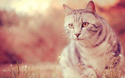 A ver qué te parece esta foto de un lindo gatito... little cat