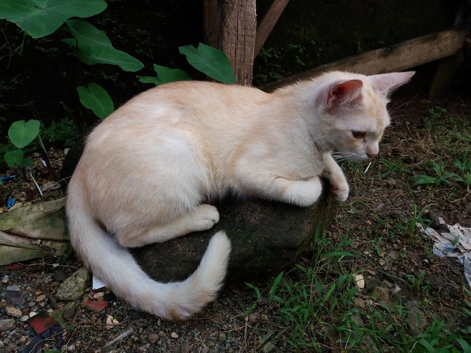 Artikel Kucing lainnya