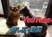 猫パンチ ↓動画