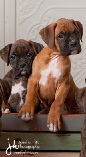 Top 10 Dog Breeds