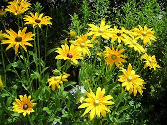 #4 flowers zone 9 flowers zone 9