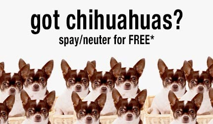 The Chihuahua Project Helps Spay and Neuter Overpopulated Breed
