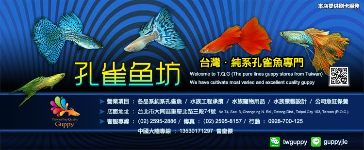 孔雀魚坊 Taiwan Top Quality Guppy