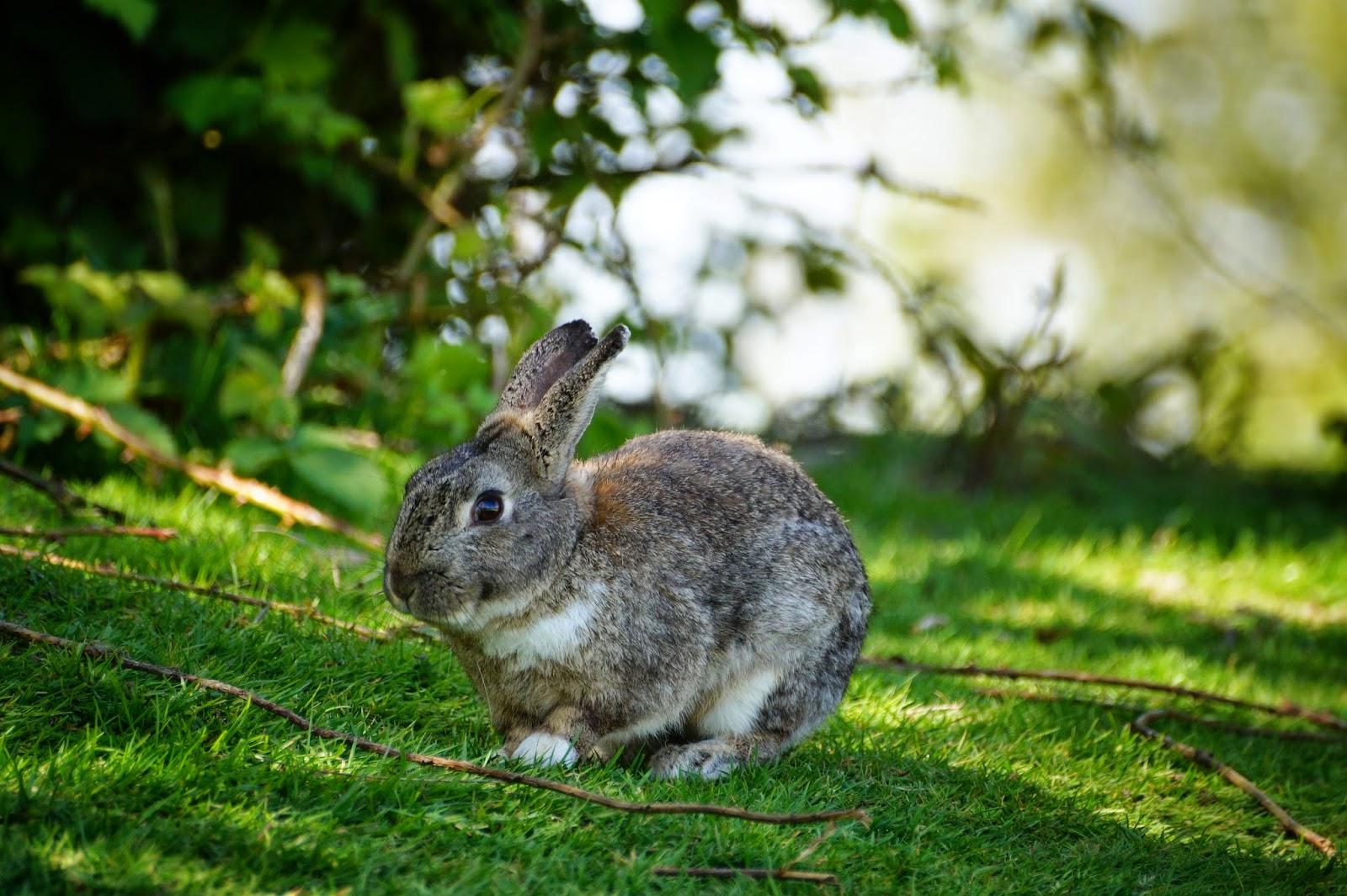 Кролики в парке Джерико.