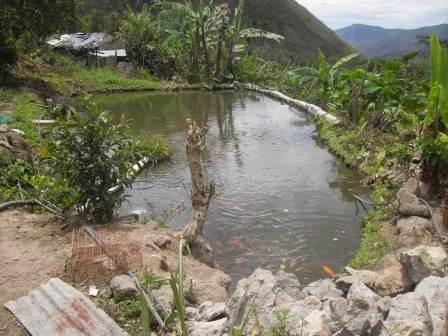 Informativo del guaico adelantan convocatoria a piscicultores for Proyecto de cria de peces en estanques