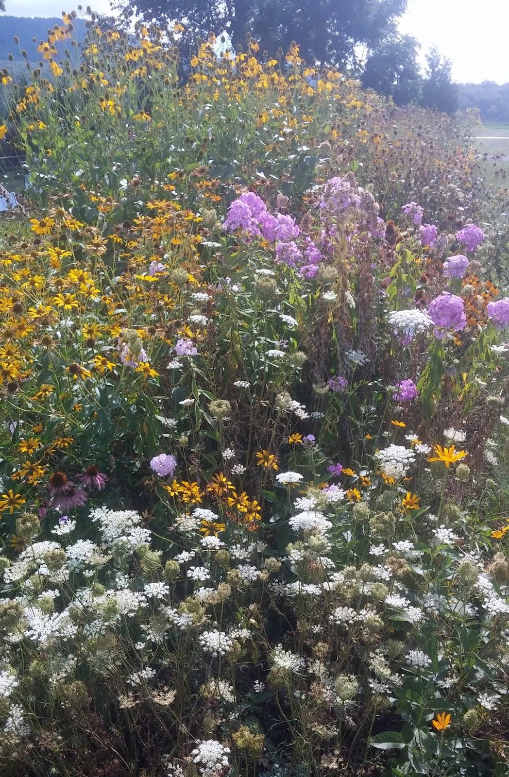 PA Environment Digest Blog: Chesapeake Bay Foundation-PA ...