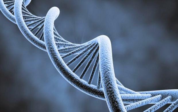 Ne putem programa ADN-ul pentru a deveni nemuritori?