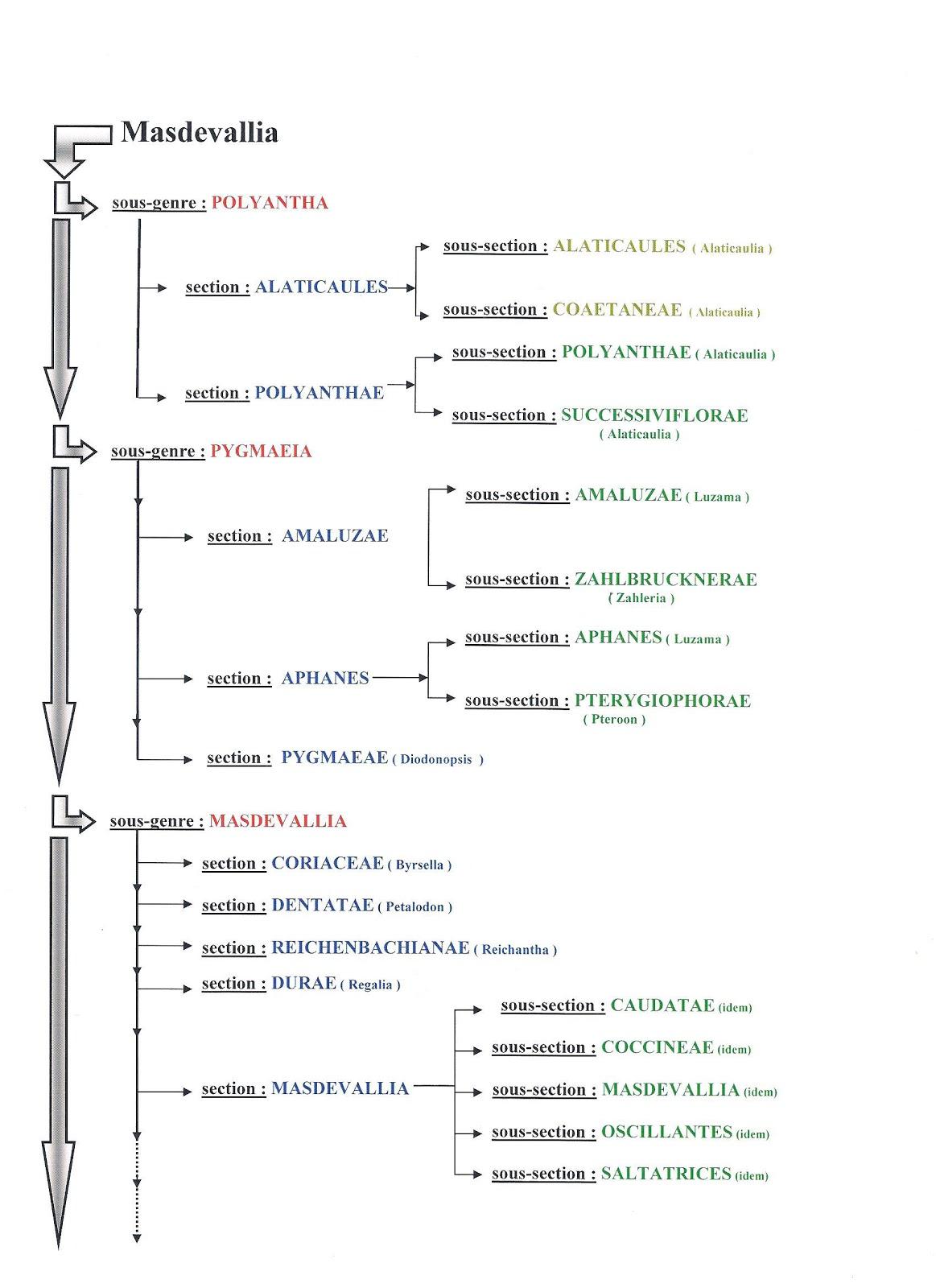 Pleurothallidinae tableau phylog n tique des masdevallia for Ouvrir un lien dans une nouvelle fenetre html