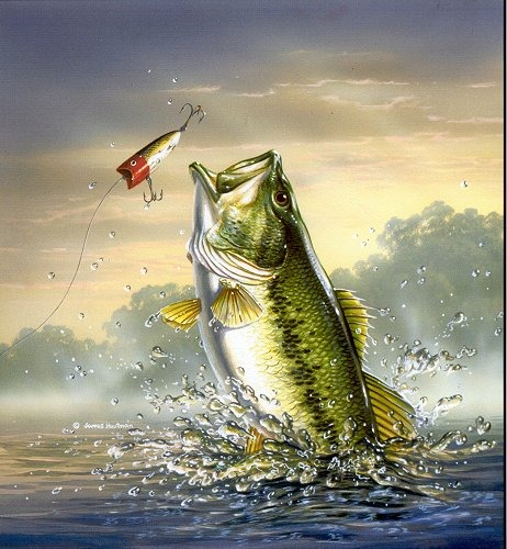 animals wallpapers bass fish