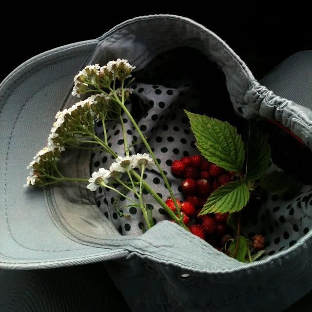 forest foraging berries foraged wild fruit wildflower erdei gyümölcs vadászat