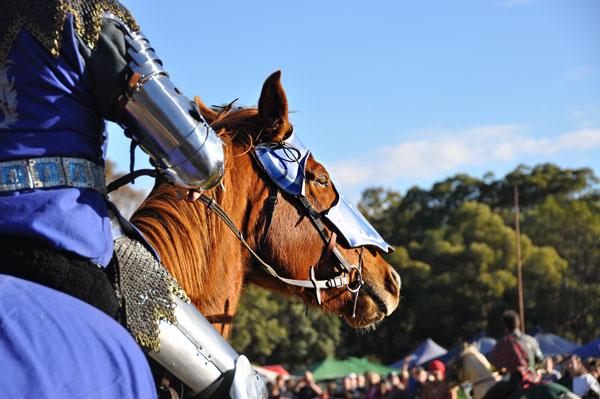 Winterfest knight steed