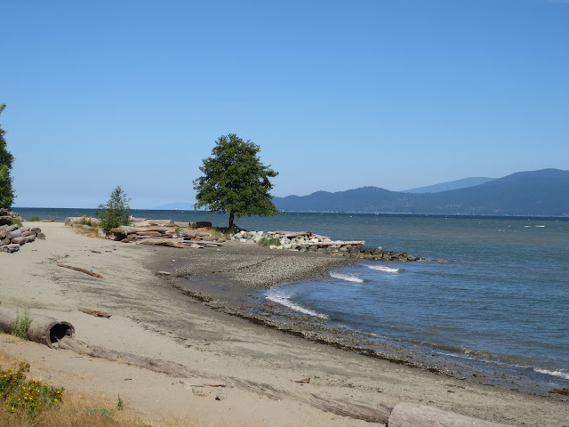 A lonely tree growing in Spanish Banks beach Vancouver, BC