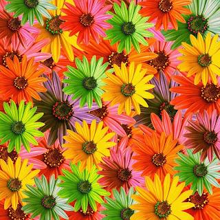 margaritas de colores Fotos de flores en 3D