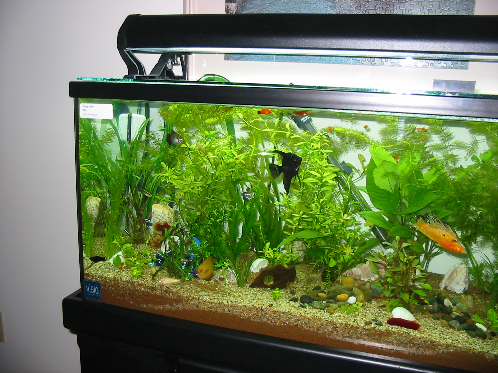 Nature lover for Design aquarium