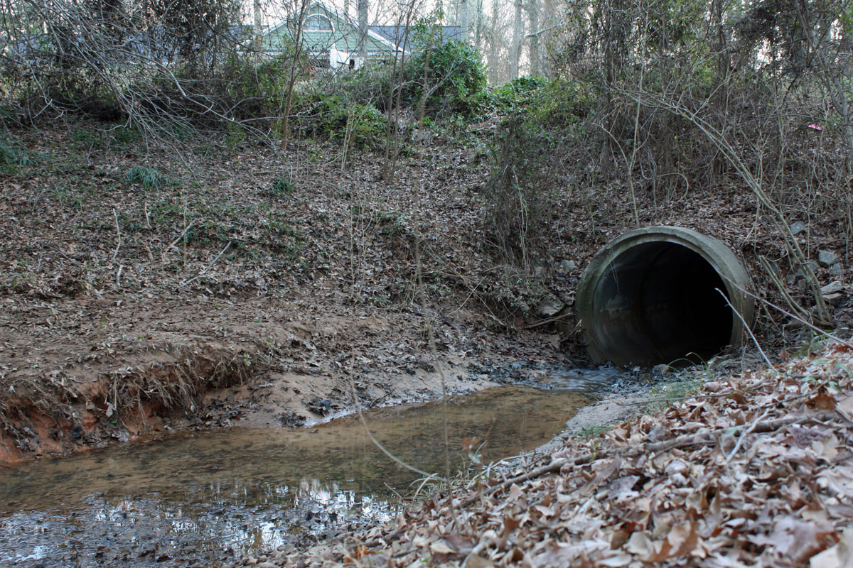 Inside a beavers dam - photo#4
