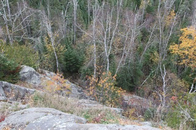 northern Minnesota hillside