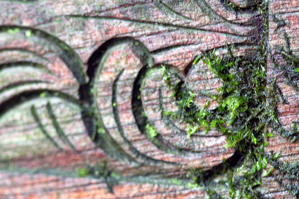 moss on wooden bench