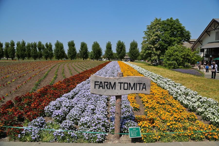 Furano / Biei Japan  City new picture : Horizontally yours: Farm Tomita, Naka Furano, Hokkaido, Japan
