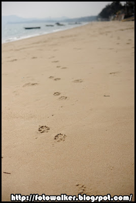 發現狗腳印