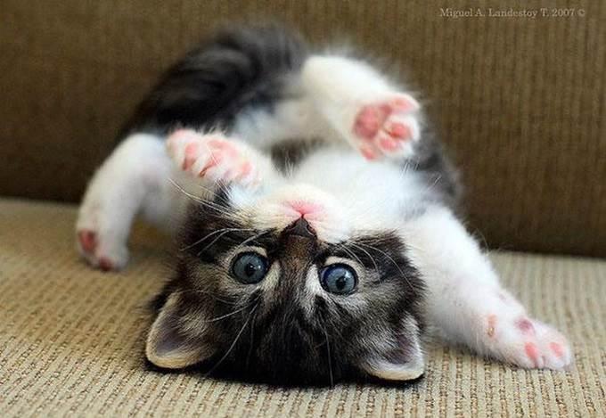 anak kucing comel